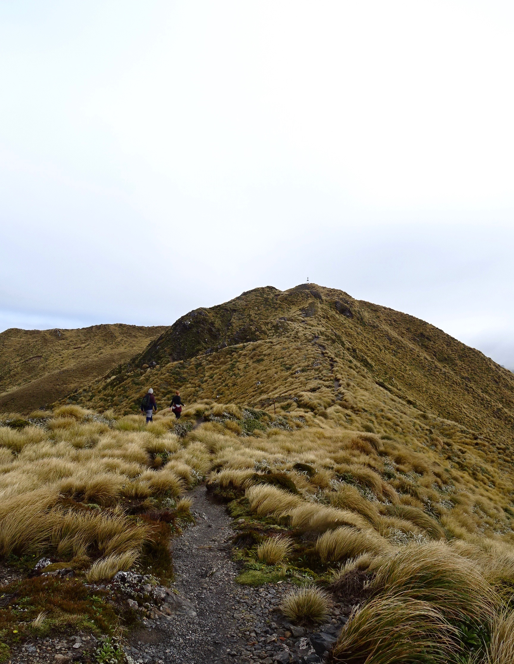 En route to the summit of Mount Holdsworth