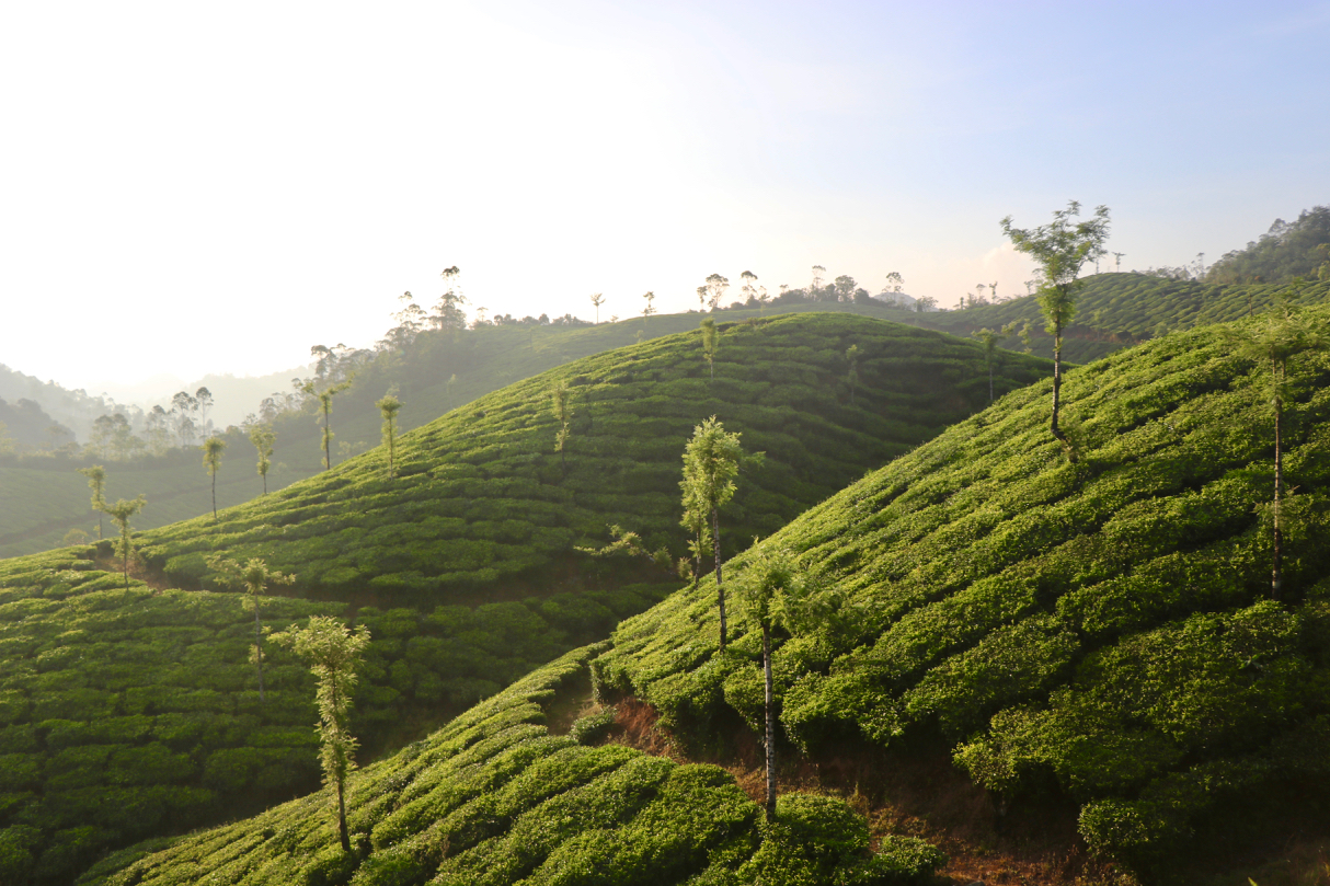 Munnar, India - spinthewindrose.com