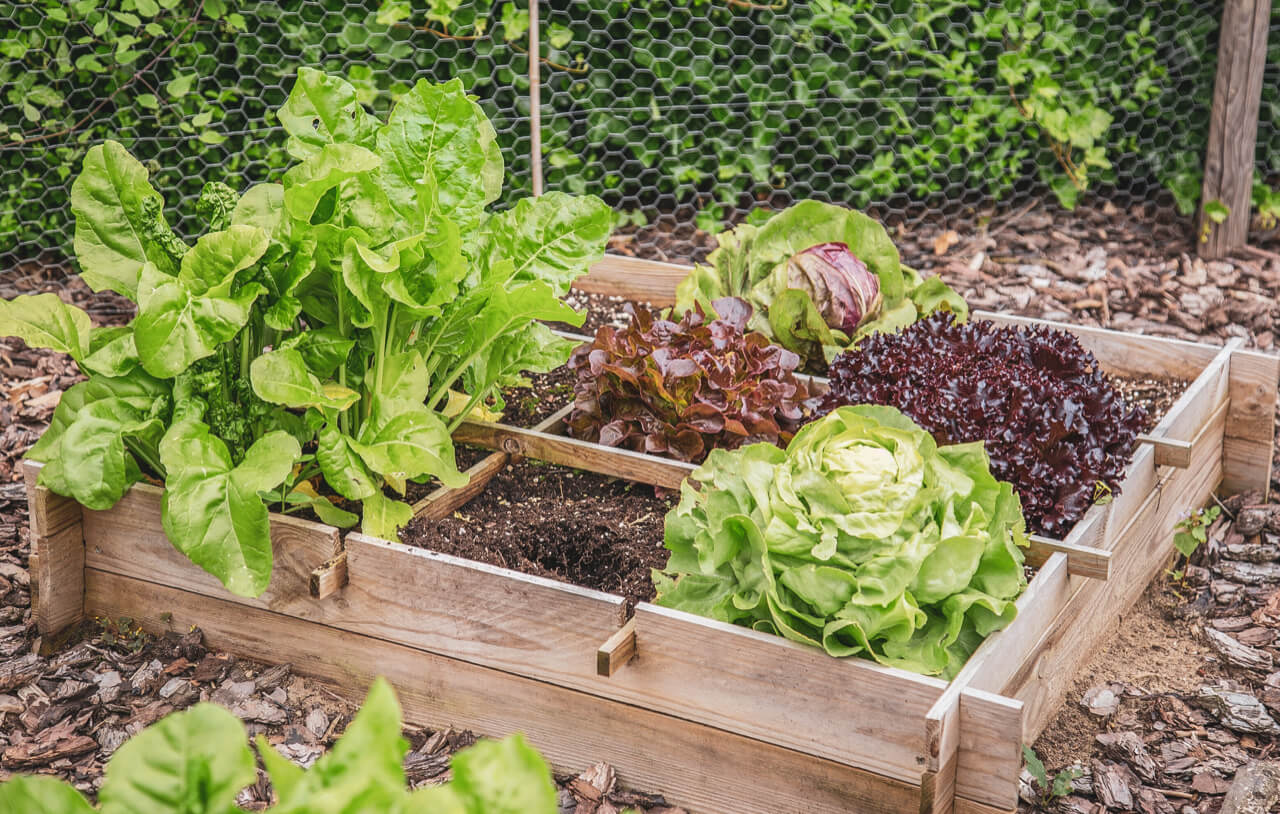 Small Vegetable Garden Tips – How to Grow Vegetables in a Small Space